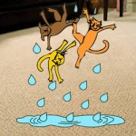 removing cat urine from carpet